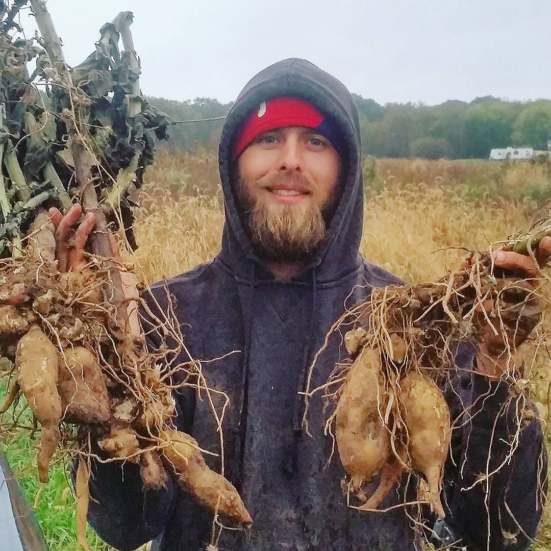 Dusty Hinz holding yacon tubers in Elmer, NJ